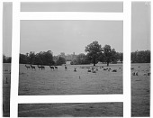 view [Miscellaneous Sites in Nottinghamshire, England]: looking toward Thoresby Hall across its deer park, with deer and sheep. digital asset: [Miscellaneous Sites in Nottinghamshire, England] [glass negative]: looking toward Thoresby Hall across its deer park, with deer and sheep.
