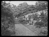 view [Unidentified Location]: an unidentified location with garden borders and a brick wall, possibly at Penshurst Place. digital asset: [Unidentified Location] [lantern slide]: an unidentified location with garden borders and a brick wall, possibly at Penshurst Place.