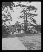 view [Dropmore]: looking toward the house, showing one of the great cedars for which the estate was known. digital asset: [Dropmore] [lantern slide]: looking toward the house, showing one of the great cedars for which the estate was known.