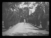 view [Sutton Courtenay Manor House]: Garden Club of America tour members on a yew-lined driveway. digital asset: [Sutton Courtenay Manor House] [lantern slide]: Garden Club of America tour members on a yew-lined driveway.