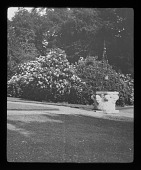 view [Nuneham House and Park]: carved stone and wrought iron water well, with a rhododendron in full bloom. digital asset: [Nuneham House and Park] [lantern slide]: carved stone and wrought iron water well, with a rhododendron in full bloom.