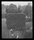 view [Compton Wynyates]: topiary work in the gardens. digital asset: [Compton Wynyates] [lantern slide]: topiary work in the gardens.