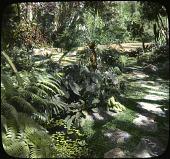 view Frelinghuysen Garden: part of rock garden. digital asset: Frelinghuysen Garden: part of rock garden.: [between 1914 and 1949?]