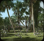 view Heamaw digital asset: Phipps Garden: [between 1914 and 1949?]