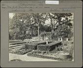view Cummer Garden: Pittosporum, Southern garden digital asset: Cummer Garden [photoprint] pittosporum hedge and gazing globe.