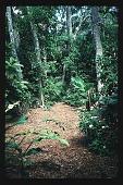 view [Untitled Garden]: Jungle path. digital asset: [Untitled Garden]: Jungle path.: 1996 May. 9.