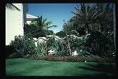 view [Untitled Garden]: ocean side (east) digital asset: [Untitled Garden]: ocean side (east): 1996 May. 9.