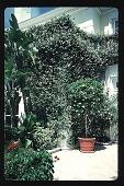 view [Untitled Garden]: south patio. digital asset: [Untitled Garden]: south patio.: 1996 May. 9.