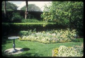 view [Garden of Mrs. Hugh Hill Chatham,]: fountain set in the middle of a parterre; garden walled by two levels of hedges; palms; lemon tree. digital asset: [Garden of Mrs. Hugh Hill Chatham,]: fountain set in the middle of a parterre; garden walled by two levels of hedges; palms; lemon tree.: 1994 Mar.
