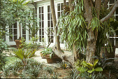 view [Lake House]: brick patio outside French doors with potted tropicals and staghorn ferns to right. digital asset: [Lake House]: brick patio outside French doors with potted tropicals and staghorn ferns to right.: 1993 Apr.