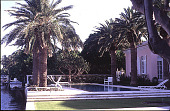 view [Untitled Garden in Palm Beach, Florida]: pool area. digital asset: [Untitled Garden in Palm Beach, Florida]: pool area.: 2000 May.