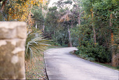 view [Eubank Garden]: entrance to winding drive through property to main house; plants include saw palmetto, chickasaw plum, live oak, Southern red cedar, wild coffee, and American beautyberry. digital asset: [Eubank Garden]: entrance to winding drive through property to main house; plants include saw palmetto, chickasaw plum, live oak, Southern red cedar, wild coffee, and American beautyberry.: 2007 Jun.
