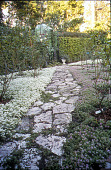 view [Foster Garden]: a coquina stone path laced with artillery fern leads northeast toward a trompe l'oeil hand-painted mural fronted by an eight-foot wrought iron frame; purple and white alyssum line the path. digital asset: [Foster Garden]: a coquina stone path laced with artillery fern leads northeast toward a trompe l'oeil hand-painted mural fronted by an eight-foot wrought iron frame; purple and white alyssum line the path.: 2007 May.