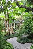 view [Villa Filipponi]: banana trees shade the curving brick walkway to the house. digital asset: [Villa Filipponi]: banana trees shade the curving brick walkway to the house.: 2013 Apr.