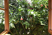 view [Casa del Carnevale]: the planted jungle outside a window includes bleeding heart, angel's trumpet and orchids. digital asset: [Casa del Carnevale]: the planted jungle outside a window includes bleeding hear, angel's trumpet and orchids.
