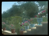 view [Bagatelle]: flower pots and urns. digital asset: [Bagatelle]: flower pots and urns.: 1920.