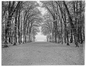 view [Versailles]: looking through trees toward the distant Grand Trianon. digital asset: [Versailles] [glass negative]: looking through trees toward the distant Grand Trianon.