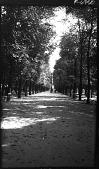 view [Tuileries Garden]: part of the Tuileries Garden. digital asset: [Tuileries Garden] [negative]: part of the Tuileries Garden.