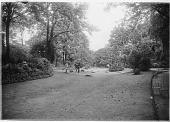 view [Parc Monceau]: lawn and landscape plantings, including some tropical varieties. digital asset: [Parc Monceau] [glass negative]: lawn and landscape plantings, including some tropical varieties.