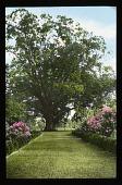 view [Henry Garden] digital asset: [Henry Garden]: [between 1914 and 1949?]