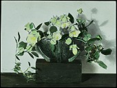 view [Miscellaneous Flower Arrangements]: flower arrangement in an modern container on top of a wooden block. digital asset: [Miscellaneous Flower Arrangements]: flower arrangement in an modern container on top of a wooden block.: [between 1914 and 1949?]