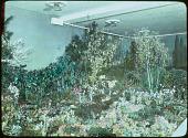 view [School Garden Exhibitions]: an exhibit of a large garden indoors. digital asset: [School Garden Exhibitions]: an exhibit of a large garden indoors.: [between 1914 and 1949?]
