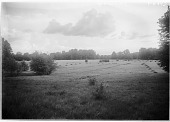 view [Muskau Park and Vicinity]: a hayfield. digital asset: [Muskau Park and Vicinity] [glass negative]: a hayfield.