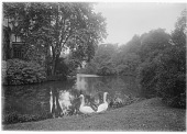 view [Muskau Park and Vicinity]: swans and the artificial lake, with the New Castle on the far left. digital asset: [Muskau Park and Vicinity] [glass negatives]: swans and the artificial lake, with the New Castle on the far left.