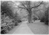 view [Muskau Park and Vicinity]: a walkway in the park. digital asset: [Muskau Park and Vicinity] [glass negative]: a walkway in the park.