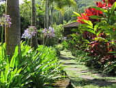 view [Johnson Nuuanu Garden]: lava pavers of rock make a side path lined by palms and colorful tropical plants. digital asset: [Johnson Nuuanu Garden]: lava pavers of rock make a side path lined by palms and colorful tropical plants.: 2010 Jul.