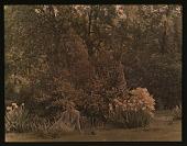 view [Unidentified Garden in Unidentified Location]: unidentified woman sitting amongst flowers on lawn. digital asset: [Unidentified Garden in Unidentified Location] [lantern slide]: unidentified woman sitting amongst flowers on lawn.
