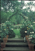 view [Rosegate]: south-facing backyard vista from conservatory, featuring potted roses and rose-covered arbor. digital asset: [Rosegate]: south-facing backyard vista from conservatory, featuring potted roses and rose-covered arbor.: 1999 Jun.