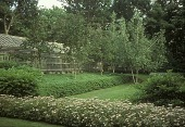 view [Villa dei Fiori]: trees and pergola in background with blooming spiraea in front. digital asset: [Villa dei Fiori]: trees and pergola in background with blooming spiraea in front.: 1999 Jun.