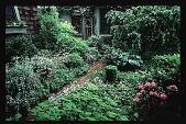 view [Bergmann-Grigsby Garden]: front woodland garden. digital asset: [Bergmann-Grigsby Garden]: front woodland garden.: 1998.