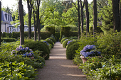view [House in the Garden]: accessible path throught the potted hydrangea and hosta under the locust allée. digital asset: [House in the Garden]: accessible path throught the potted hydrangea and hosta under the locust allée.: 2012 May.