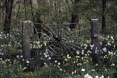 view [Questover]: spider web sculpture with surrounding bulbs and woodland beyond. digital asset: [Questover]: spider web sculpture with surrounding bulbs and woodland beyond.: 2006.