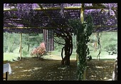 view [Ohimiya Filature]: wisteria-covered arbor where tea was served. digital asset: [Ohimiya Filature]: wisteria-covered arbor where tea was served.: 1935 May.