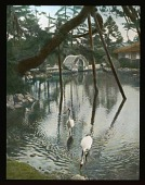 view [Miscellaneous Sites in Japan]: a prop-supported pine over a pond in the Rikugi-en Garden in Tokyo, with cranes in the foreground. digital asset: [Miscellaneous Sites in Japan]: a prop-supported pine over a pond in the Rikugi-en Garden in Tokyo, with cranes in the foreground.: 1935 May.