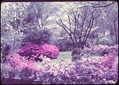 view Carson Garden digital asset: Carson Garden: 1956