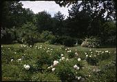 view Paxton Garden digital asset: Paxton Garden: 05/01/1949