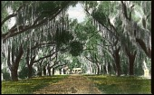 view Rosedown Plantation digital asset: Rosedown Plantation: [between 1914 and 1949?]