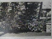 view Blair Garden digital asset: Blair Garden [slide]: 'Surprise Garden' in unidentified location.