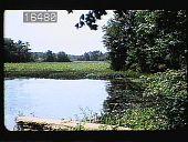 view [Lotus Pond] digital asset: [Lotus Pond]: 1950