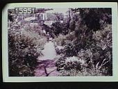 view [The Chimneys]: walkway between boarders of shrubs with a man standing halfway down the path. digital asset: [The Chimneys]: walkway between boarders of shrubs with a man standing halfway down the path.: 1957 Jul.