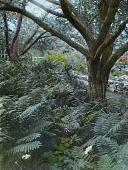 view [Forbes Garden] digital asset: [Forbes Garden]: [between 1914 and 1949?]