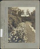 view [Weld]: Pyrethrum hybridum digital asset: [Weld] [photoprint]
