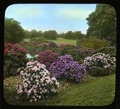 view Holm Lea: Rhododendrons digital asset: Holm Lea [slide]