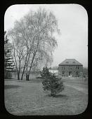 view Arnold Arboretum: Betula alba digital asset: Arnold Arboretum [slide]