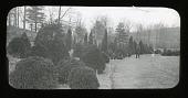 view Arnold Arboretum: Rare evergreen collection digital asset: Arnold Arboretum [slide]