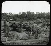view Arnold Arboretum digital asset: Arnold Arboretum [slide]